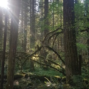Light filters through trees in Oregon State Park